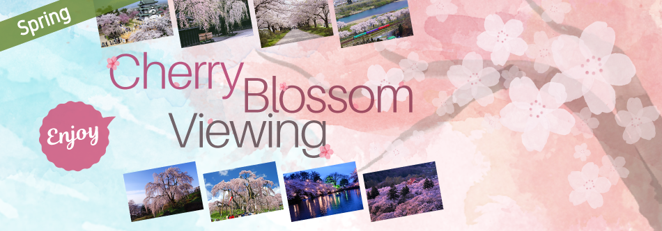 Spring-Enjoy Cherry Blossom Viewing