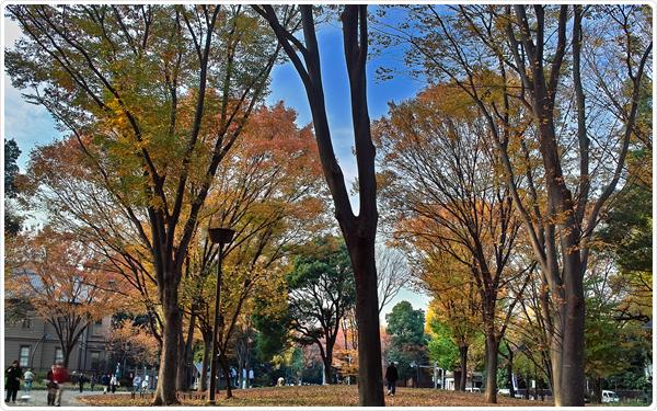 Ueno Park Autumn Ueno Park – Tokyo